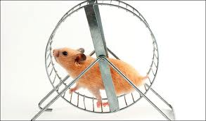 HAMSTER Unknown